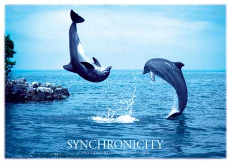 lgph0029+dolphin-acrobatics-synchronicity-aspirational-poster.jpg