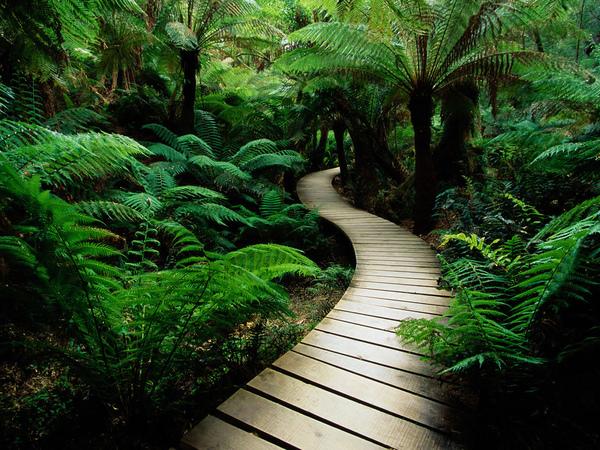 serene-nature-walk-trail.jpg