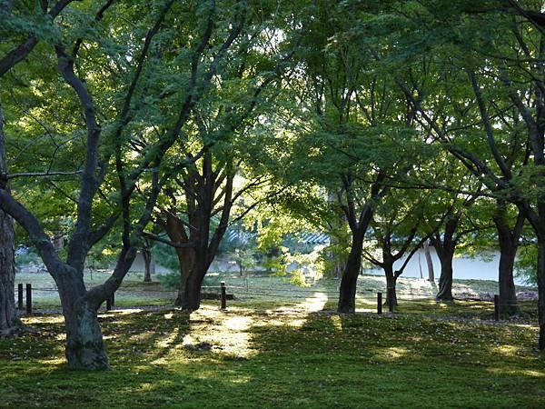 1108-東福寺4