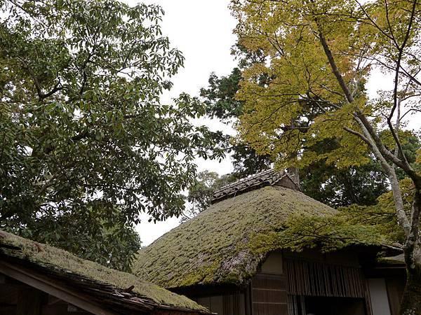 1109-金閣寺3