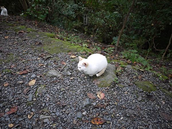 1110-哲學之道小貓