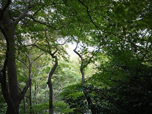 1110-清水寺群樹