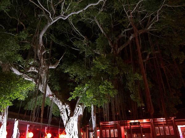 1026總兵署內院大樹