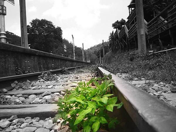 舊山線鐵軌-1.jpg