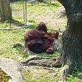 人猿.jpg