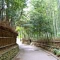 0908竹林綠色隧道.jpg