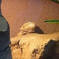 0928-日光浴蜥蜴.jpg