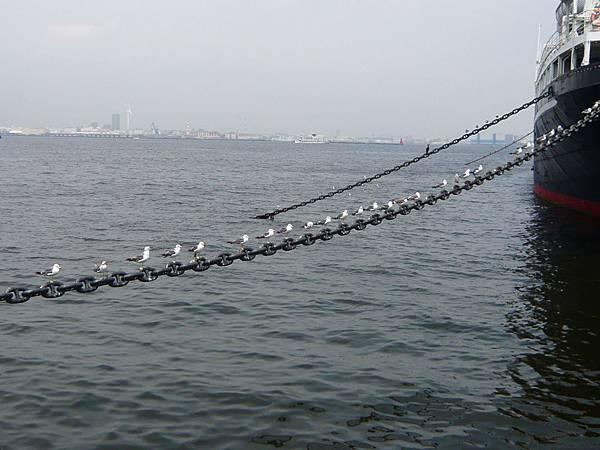 海鷗排排站