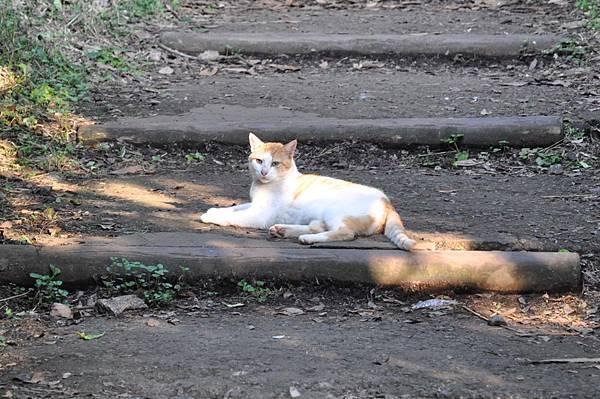 江之島貓咪6