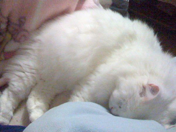 白貓-1.jpg