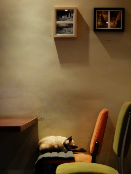 catcafe-1.jpg