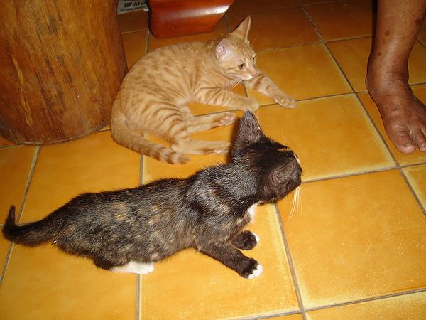 越來越多貓貓貓貓貓