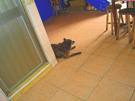 忠實守護廚房的愛犬