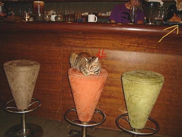 吧台又來一隻貓