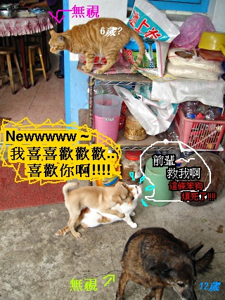 03.貓與狗與合諧.jpg