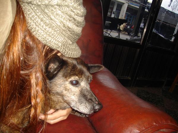 DOG我喜歡你