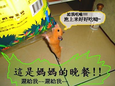 釣老鼠!!