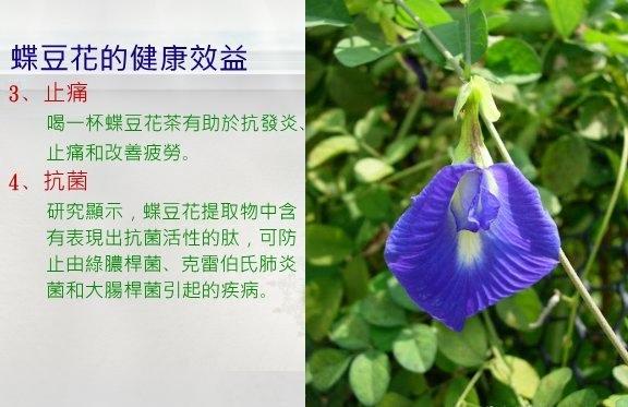 蝶豆花-2.jpg