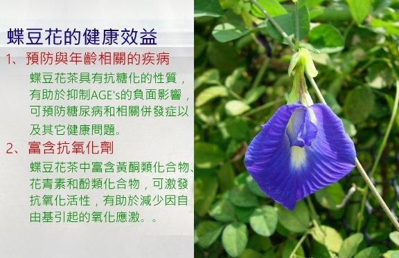 蝶豆花-1.jpg