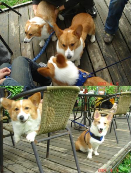 上:三犬密會。下:和Milky姐姐合照^^。