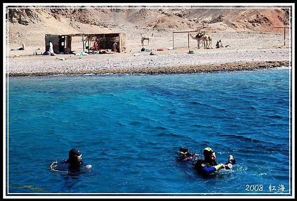 紅海與駱駝