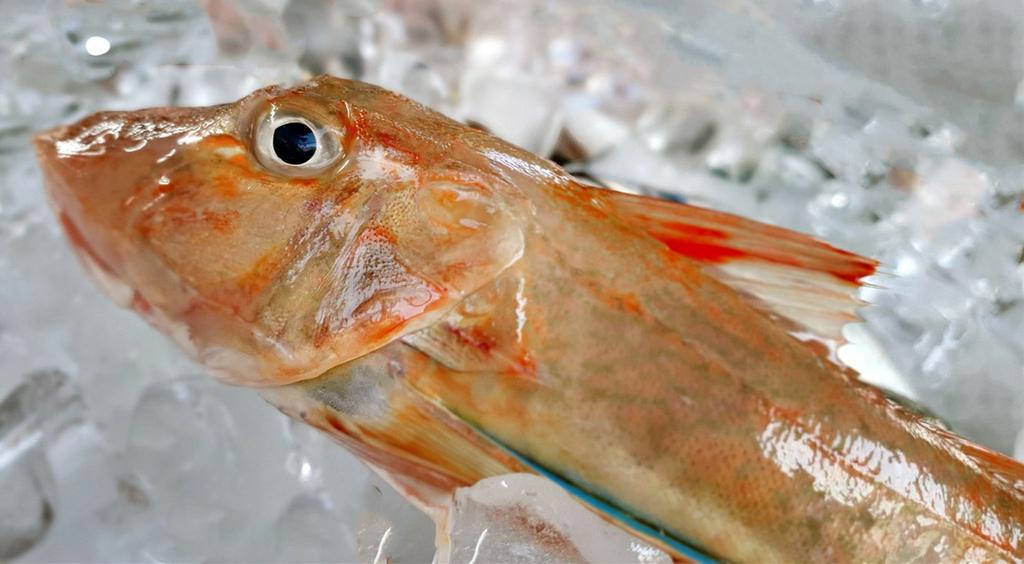 fish-5536308_1280_副本.jpg
