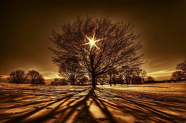 Tree_Of_Light_by_lowapproach.jpg