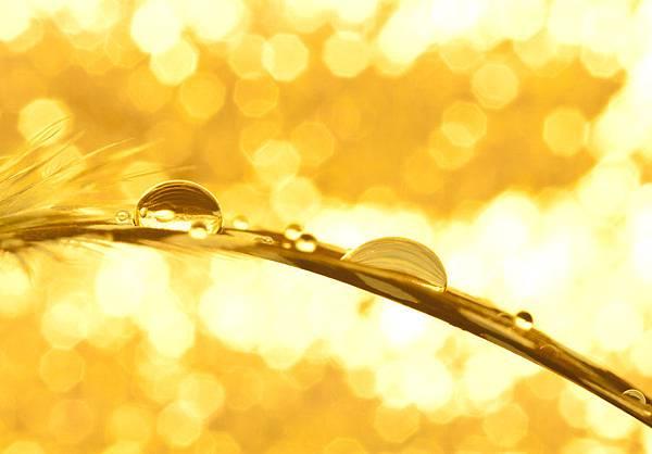 the_gold_rush_by_pqphotography-d464urj.jpg