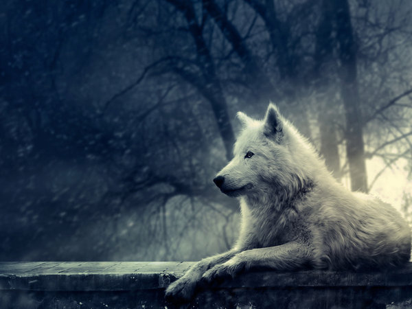 night_of_the_wolf___wallpaper_by_lady_amarillis-d3420ue.jpg