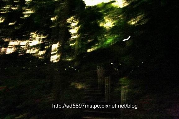 螢光飛舞2.jpg