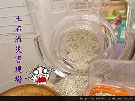 2012.10.29可樂寄養 001