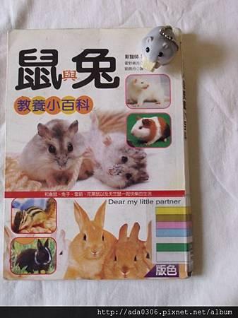 鼠與兔教養小百科
