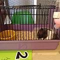 鼠聚照片 001.jpg