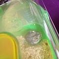 鼠聚照片 004.jpg