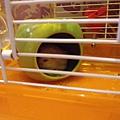 鼠聚照片 016.jpg