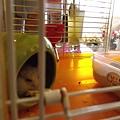 鼠聚照片 021.jpg