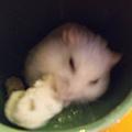 鼠聚照片 022.jpg