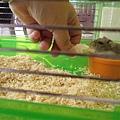 鼠聚照片 025.jpg