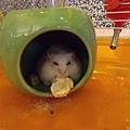 鼠聚照片 026.jpg