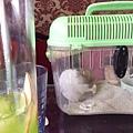 鼠聚照片 029.jpg