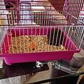 鼠聚照片 037.jpg