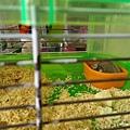 鼠聚照片 038.jpg