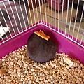 鼠聚照片 043.jpg