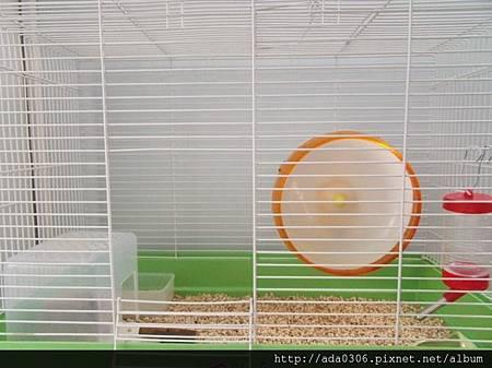 560大鼠籠1.jpg