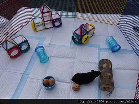 美國Superpet puzzle寵物鼠拼裝玩具舊色