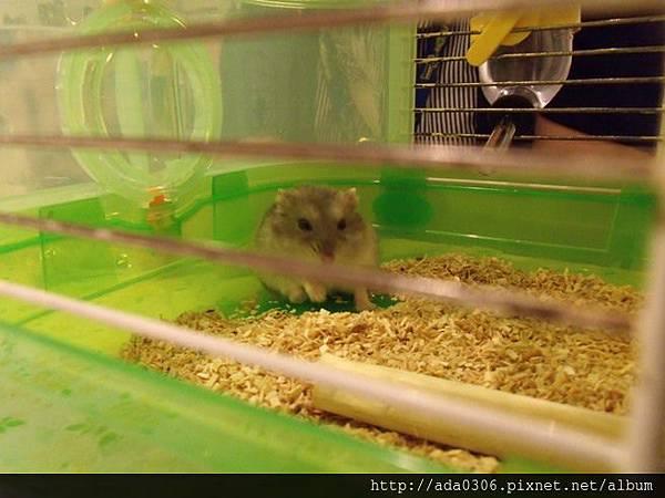 一歲生日鼠聚 001.jpg