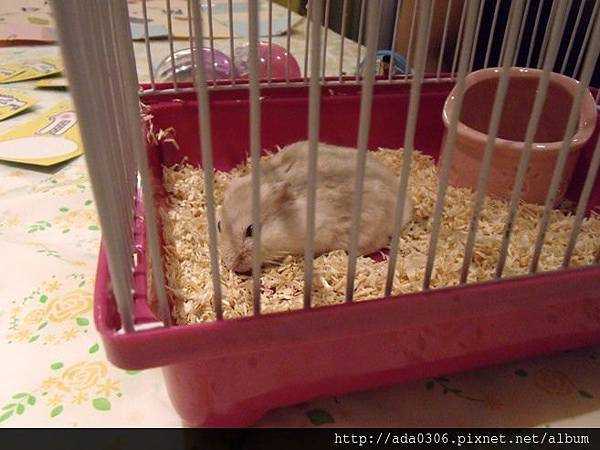 一歲生日鼠聚 017.jpg