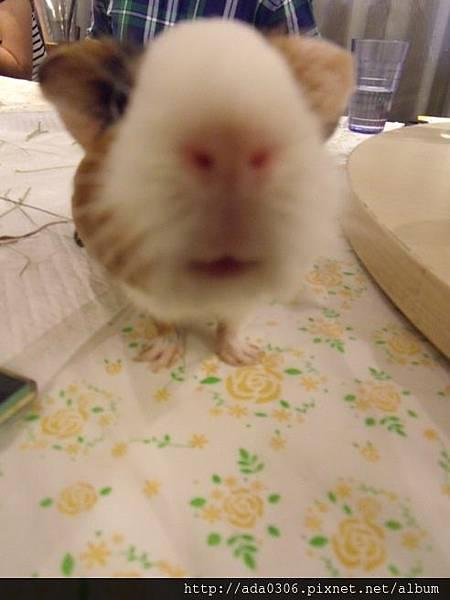 一歲生日鼠聚 030.jpg