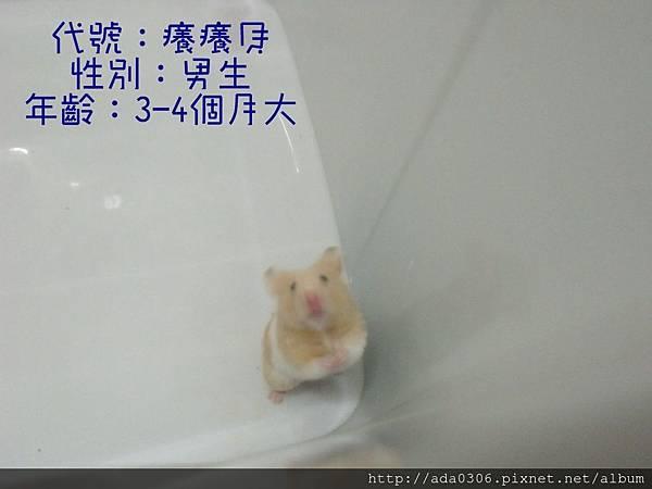 癢癢貝相親 (2).jpg