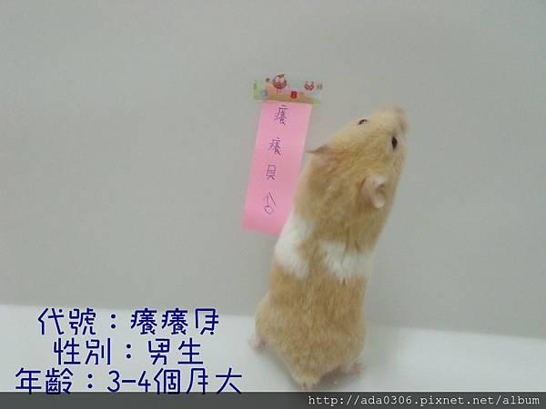 癢癢貝相親 (1).jpg